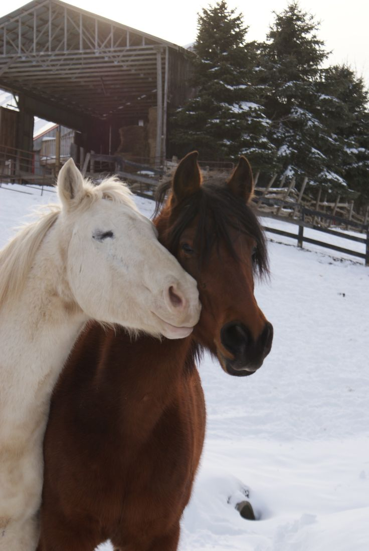 On the eleventh day of Christmas...  Follow our story at https://www.facebook.com/pages/Conestogo-River-Horseback-Adventures/300198049923  #HolidayTraditions #ThatSpecialSomeone #Horses #12DaysOfChristmas #Waterloo #DoSomethingDifferent