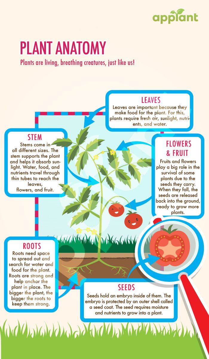 Plant Anatomy For Children Teach Your Kids To Grow Plants At Home