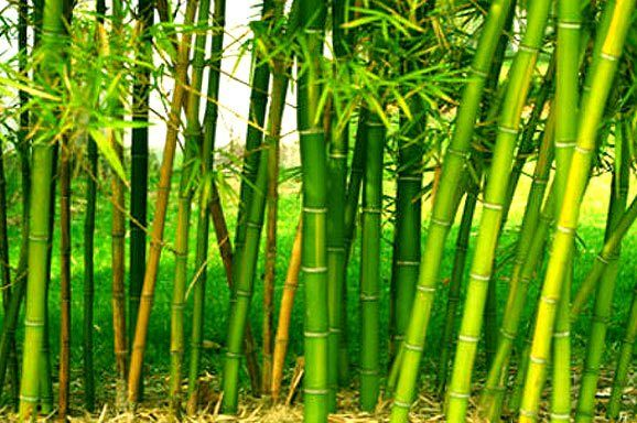 Bamboo Farming - design realpalmtrees.com - #Fall #palmtreelandscape #cool #palms #palmTrees #fallwinterIdeas #plants buy palm trees #DIYIdeas #TropicalYardIdeas #texas #realpalmtrees #california #florida