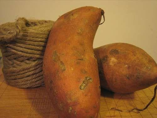 DIY Sweet Potato Dog Chew... definitely going to try this