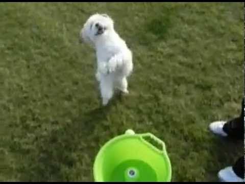 Training A Dog To Fetch A Ball