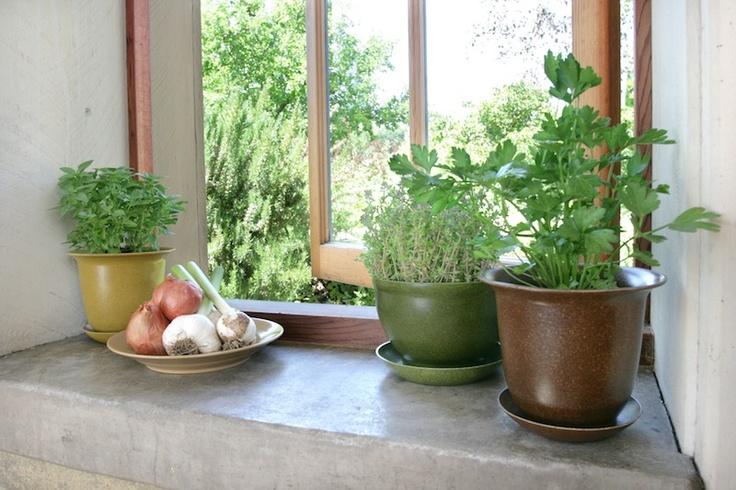 Oltre 1000 idee su piante da balcone su pinterest piante for Piante da comprare