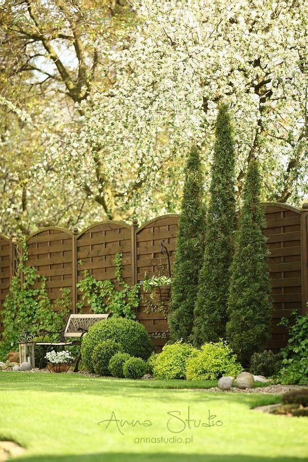 3 sharp trees by ornamental pear 2. Don't miss hanging basket!