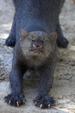The Cat House feline conservation center