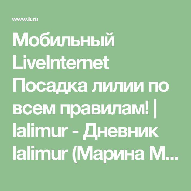 Мобильный LiveInternet Посадка лилии по всем правилам! | lalimur - Дневник lalimur (Марина Манукова) |