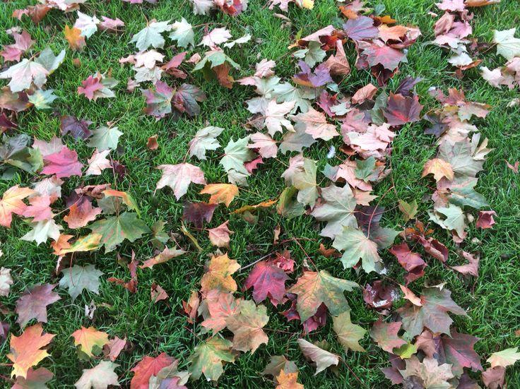 Autumn leaves, Glasnevin