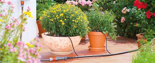 Taimede talvitamisest - Aiapidamisnipid, Elustiil, Talv