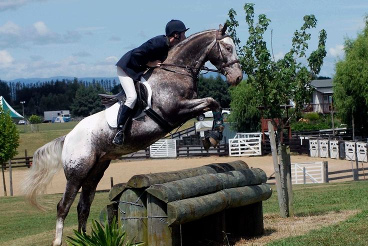 GAB's Whata Kracka - New Zealand - Appaloosa stallion at stud
