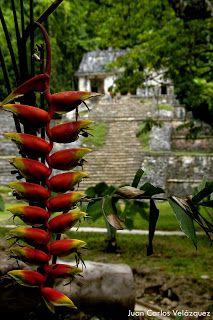 Suma de instantes: Flora y Fauna, Chiapas
