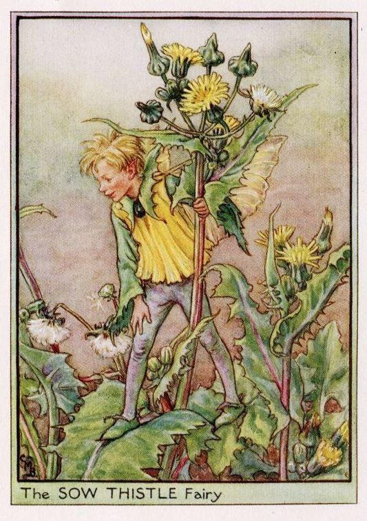 Sow Thistle Flower Fairy Vintage Print, c.1950 Cicely Mary Barker-boekillustratie plaat