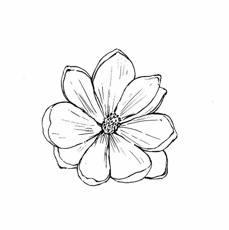 Flower Outline Drawing : Best magnolia flower outline tattoo images on pinterest