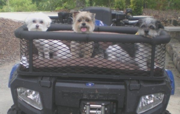 Take Dog On Atv Atv Dog Box Features Pet Stuff Dog