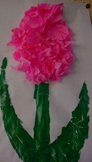 * Hyacinth, scheuren en propjes...