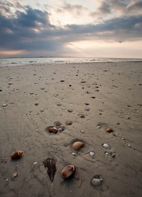 sanibel island, florida is the place me and my family go every year since I was born