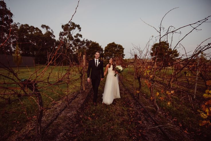 Winery vines in May ~ Christopher Robert wedding photography ~