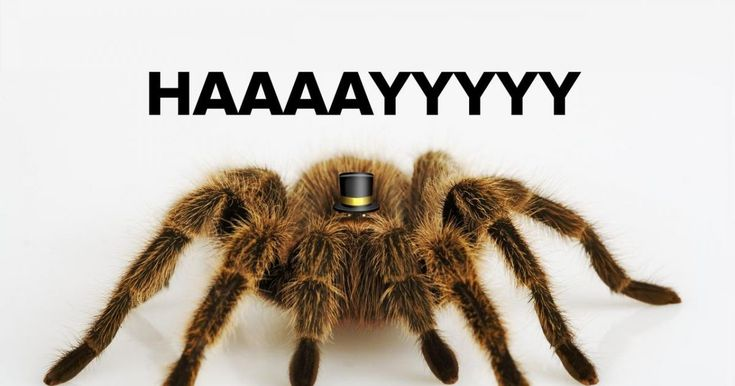Meet The 14 New Types Of Spiders That Will Terrify You For The Rest Of Your Life - View article: http://ilyke.co/meet-the-14-new-types-of-spiders-that-will-terrify-you-for-the-rest-of-your-life/75550 @ilykenet