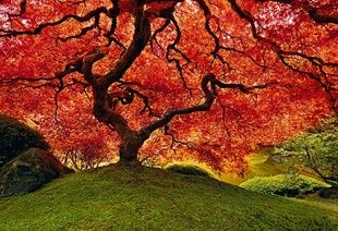 Peter Lik Photography