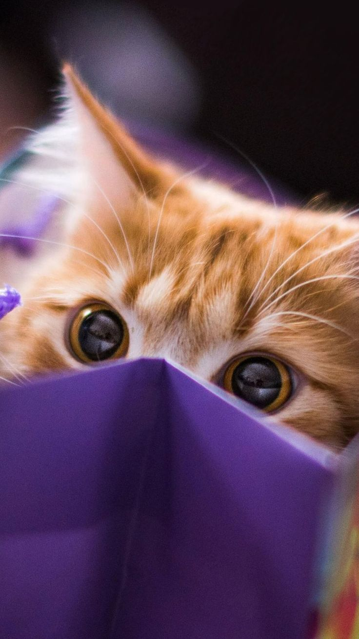 Wallpaper iphone cute cat - Cute Cat Eye Wallpaper Iphone Hd