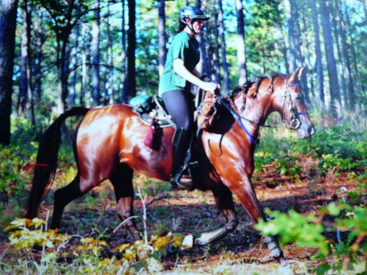 Endurance 101 a gentle guide to the sport of longdistance riding