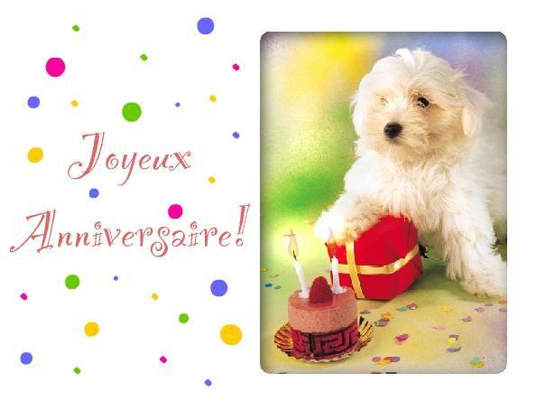 carte anniversaire chien bichon