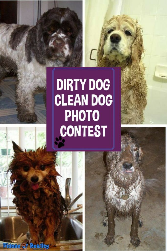 Dirty Dog Clean Dog Photo Contest