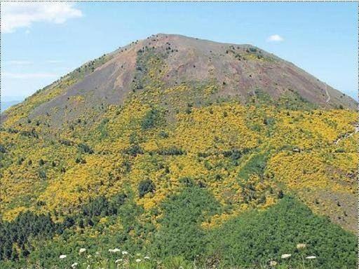 Gli studiosi: «La ginestra etnea sta cancellando il Vesuvio»