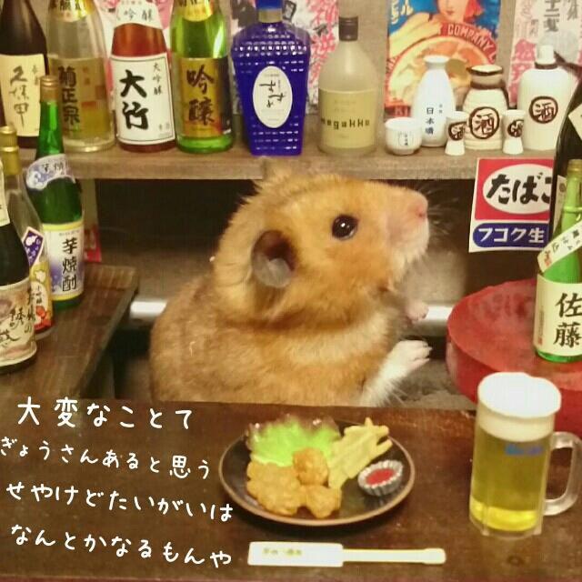 【萌死必至】ハムスターが経営する「居酒屋 銀次」に、切実に行きたい:DDN JAPAN