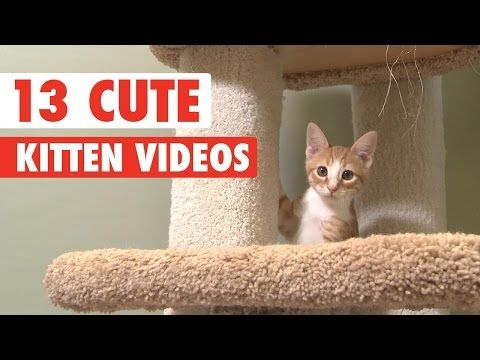 13 Cute Kittens Video Compilation 2016 : Video Clips From The Coolest One