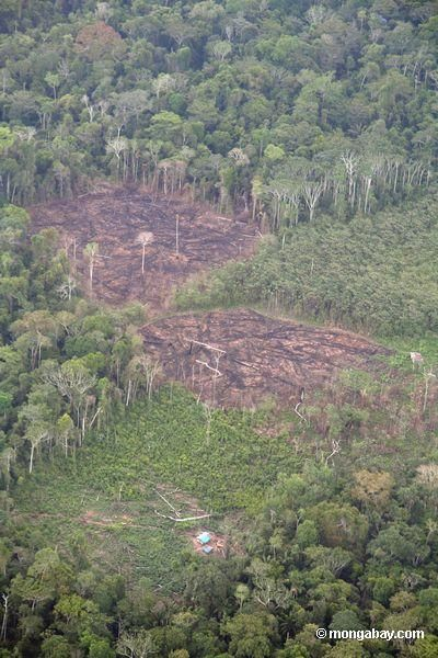 rainforest deforestation speech