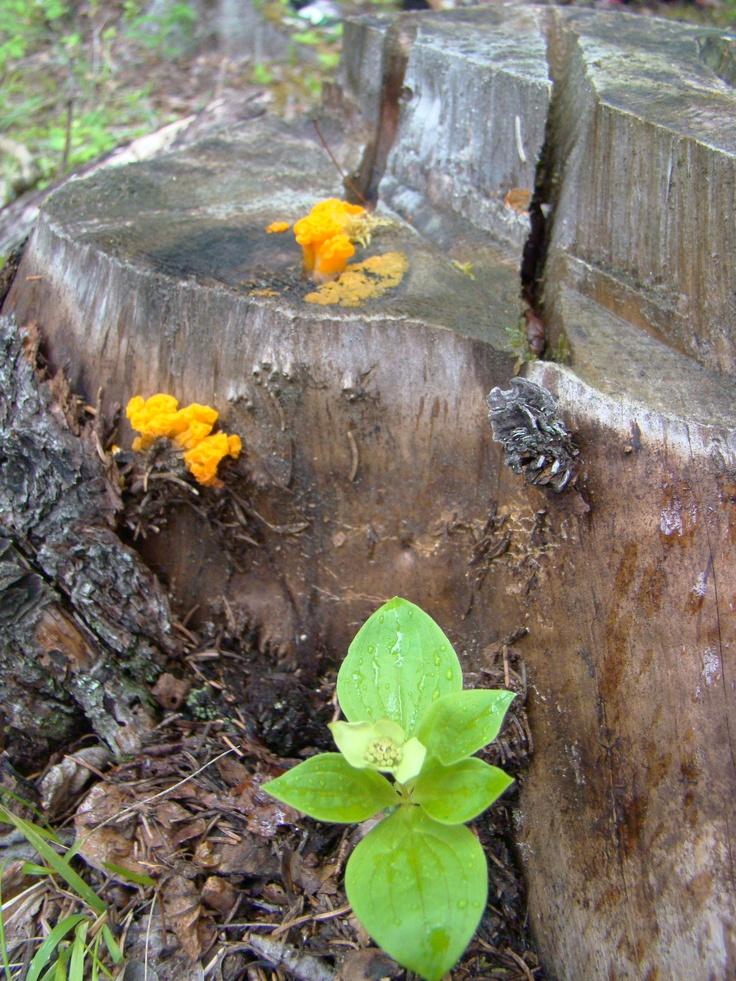 Colourful fungus.