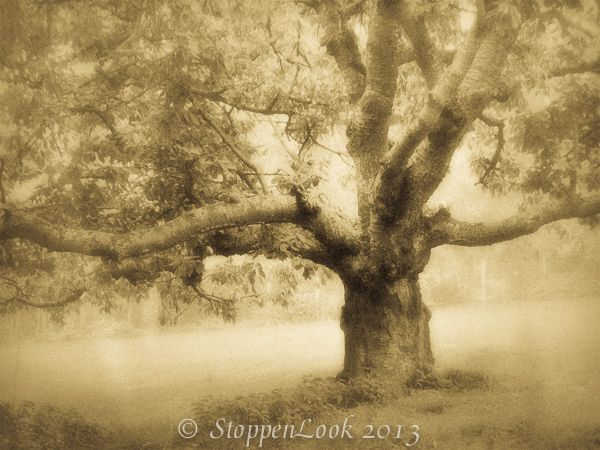 "While visiting with my girlfriend and her family in Northwest Germany, I had to pass this tree each time I went out for a walk. Each and every time I stopped to admire it. Print size: 8.5""x11"" Archival Quality. ©StoppenLook"