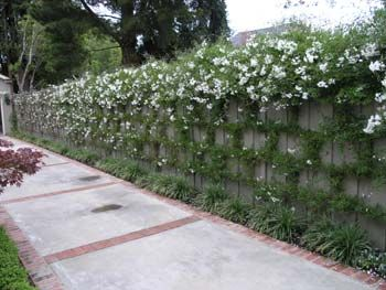 78 Images About Block Wall Fence On Pinterest Planters