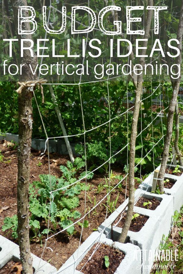 Growing vertically is a great way to make the most of a small garden space. Learn to build an inexpensive garden trellis from materials you might already have on hand. Training peas and beans on a homemade garden trellis will give you more space in limited garden beds by growing them vertically. #garden #verticalgarden #smallgarden via @Attainable Sustainable