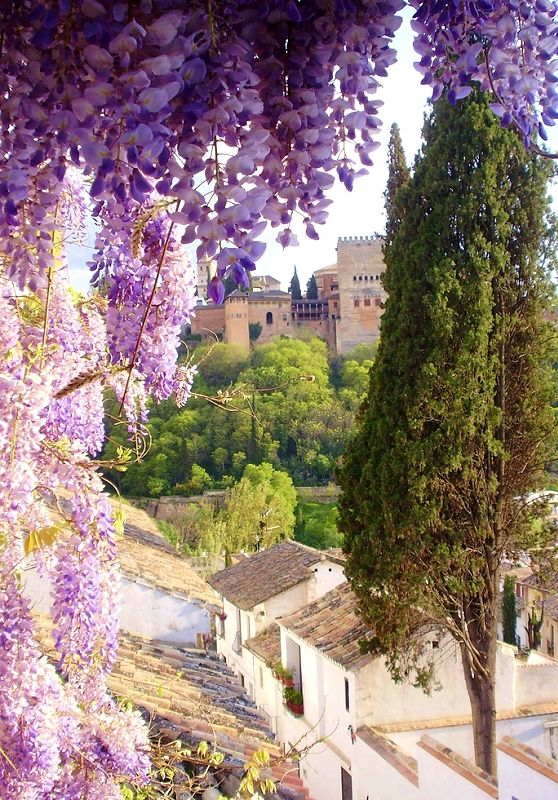 Granada. Spain // because whisteria is my one true love
