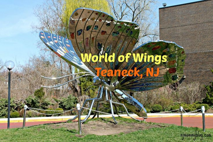 World of Wings Butterfly Museum and Children's Playland in Teaneck, NJ