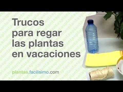 Trucos para regar las plantas en vacaciones   facilisimo.com - YouTube