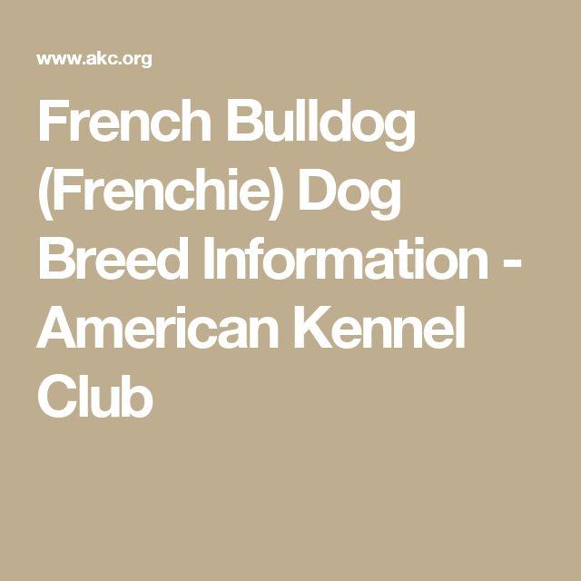French Bulldog (Frenchie) Dog Breed Information - American Kennel Club