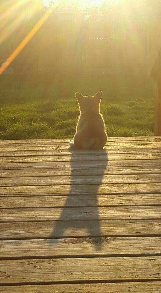 corgi sits on deck alone