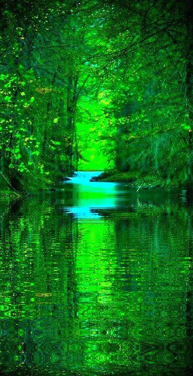 """Natuur  (plaatje gevonden op Pinterest onder de zoekterm """"Forrest""""."""