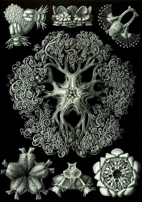 ART+DESIGN+-+blog+de+rodolfo+herrera+charolet+%285%29.jpg (564×801)