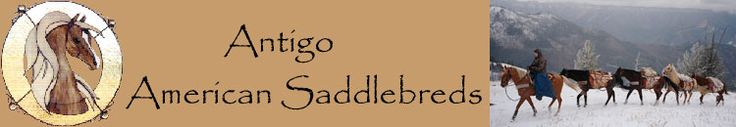 Antigo American Saddlebreds - Specializing in Beautiful Palomino American Saddlebred Horses and the Home of Gold Suntana