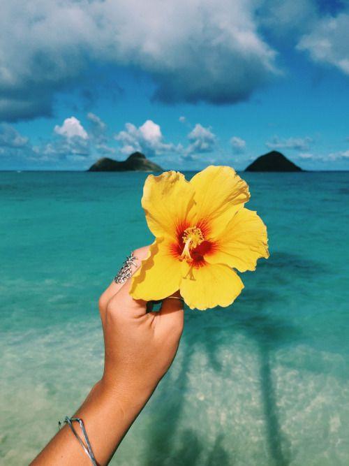 Tropical Flower, Tropical Beach