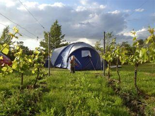Wijngaard Maronesse in Marknesse, Flevoland Eén van unieke kampeerplaatsen tijdens Uit-jeTent Weekend. Kamperen bij de wijngaard. Tijdens Uit-jeTent kun voordelig kamperen en zijn er heel veel activiteiten.