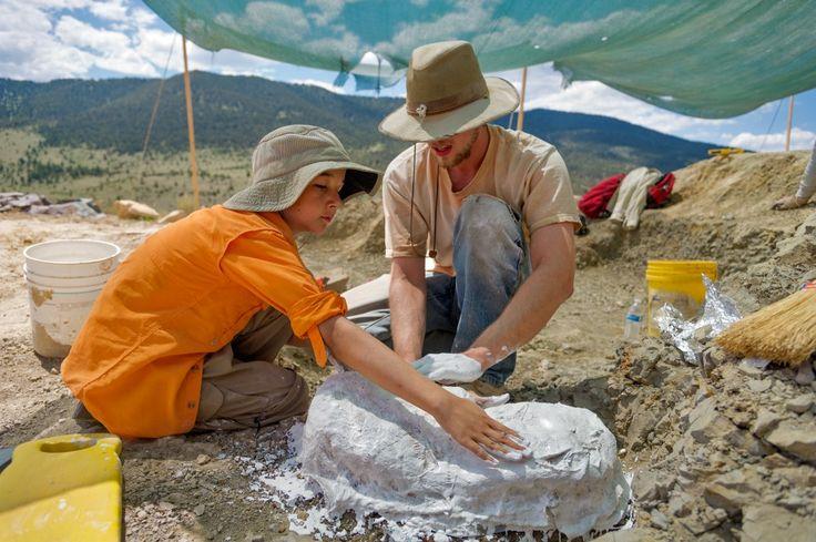 Sam Woolery and Cary Woodruff plaster the Apatasaurus vertebra that Sam discovered.