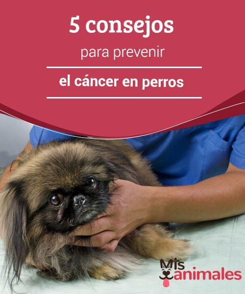 5 #consejos para prevenir el #cáncer en perros  Gracias a los avances de la medicina #veterinaria y de una buena nutrición, los #canes ahora viven más tiempo. Pero como nada es perfecto, los animales a veces enferman.
