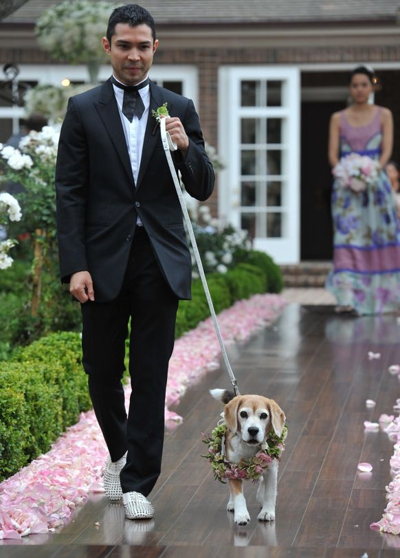 Including Pets at your wedding