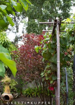 Grape Arbor, Chiminea - eclectic - Landscape - Los Angeles - Ketti Kupper Conscious Life Design