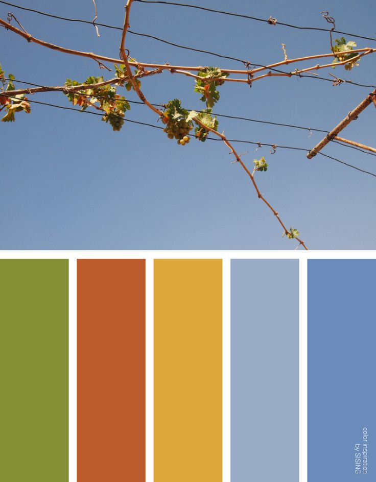 [color inspiration & photo by SISING] fruit, green grape, orchard, country, warm, autumn