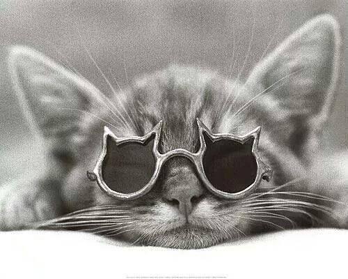 wicked-naughty-diva:  Cat nap. ;)