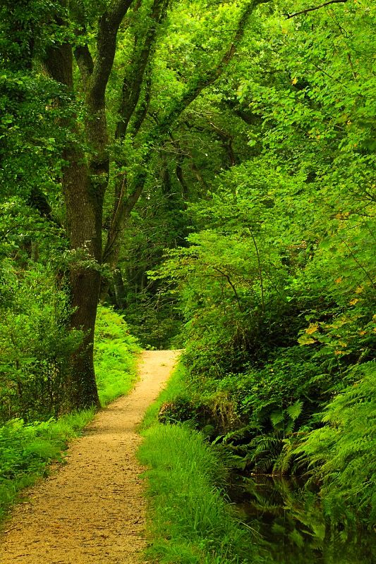 Footpath & Leat, Luxulyan Valley (Cornwall, England) by Mike Crowle